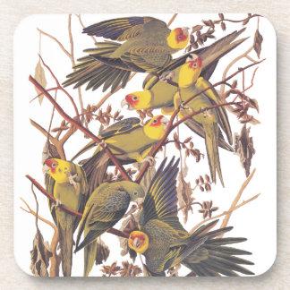 De Parkiet van Carolina van Audubon Onderzetter