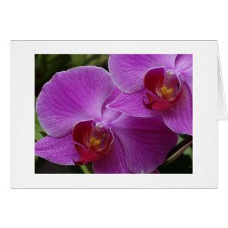 De Perfectie van de orchidee Briefkaarten 0