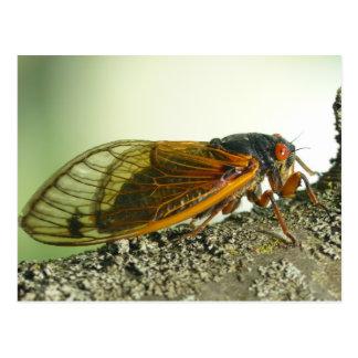 De periodieke Prentbriefkaar van de Cicade Briefkaart
