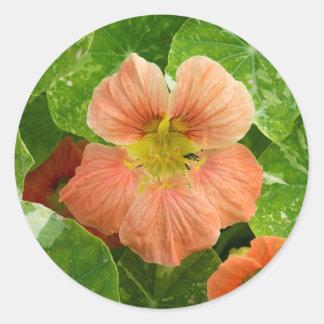 De perzik Gekleurde Bloem van de Oostindische kers Ronde Sticker
