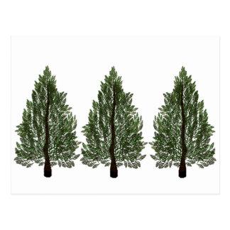 De Pijnbomen van Tripple Briefkaart
