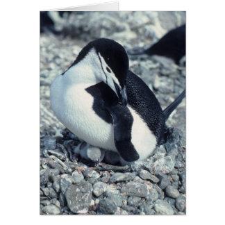 De Pinguïn van Chinstrap Wenskaart