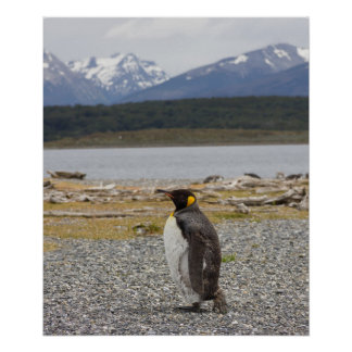 De Pinguïn van de koning, Isla Martillo, Tierra Poster