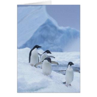 De Pinguïnen van Adelie (adeliae Pygoscelis) op ij Wenskaart
