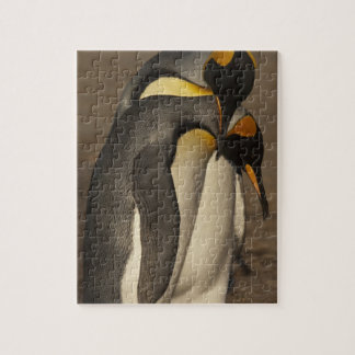 De Pinguïnen van de koning (patagonica van Aptenod Puzzel