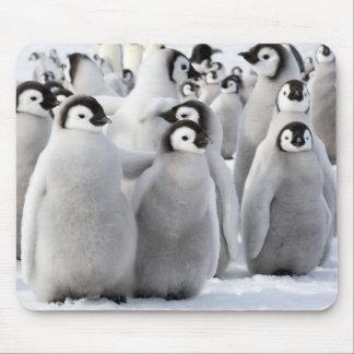 De pinguïnkuikens van de keizer muismat