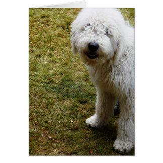 De pluizige Kroes- Slechte Hond van de Dag van het Wenskaart