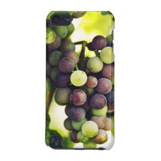 De prachtige Druiven van de Wijnstok, de Zon van iPod Touch 5G Hoesje