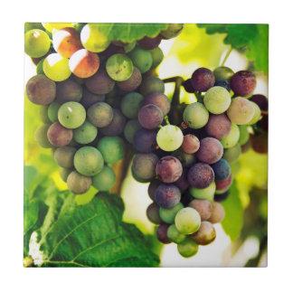 De prachtige Druiven van de Wijnstok, Natuur, de Keramisch Tegeltje