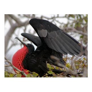 De prachtige Vogel van het Fregat Briefkaart