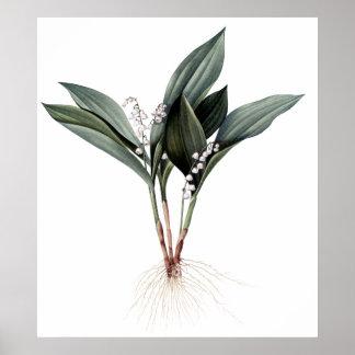 De premie botanische druk van het poster