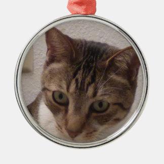 De Premie van de Kat van de gestreepte kat om Zilverkleurig Rond Ornament