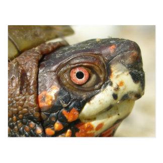 De prentbriefkaar van de Schildpad van de doos Briefkaart