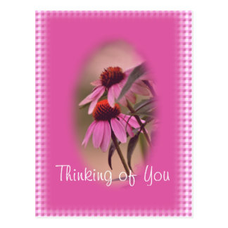 De Prentbriefkaar van Echinacea & van het Briefkaart