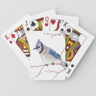 De Provincie van Wichita, Texas. Blauwe Jay5 Speelkaarten