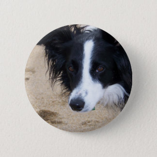 De punten van border collie ronde button 5,7 cm