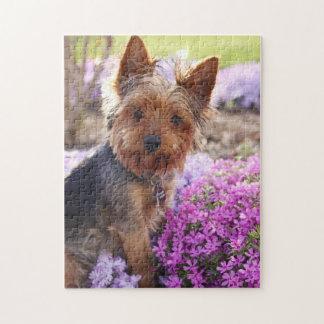 De Puzzel van Yorkshire Terrier Puzzel