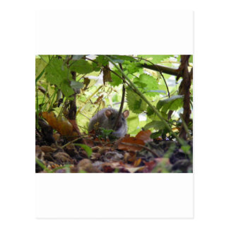 De rat van de rivier briefkaart
