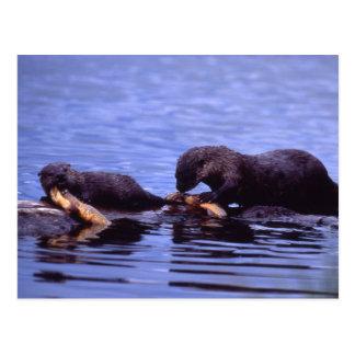 De Reeks van het Wild van de Otters van de rivier Briefkaart