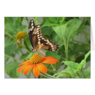 De reuze Kaart van de Vlinder Swallowtail
