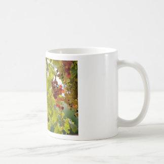 De rode druiven van de close-up onder bladeren koffiemok