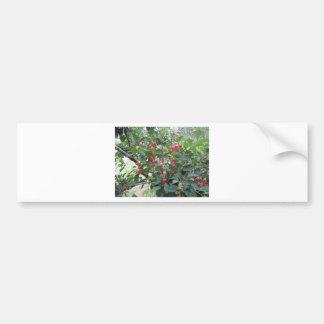 De rode kersen van Montmorency op boom in Bumpersticker