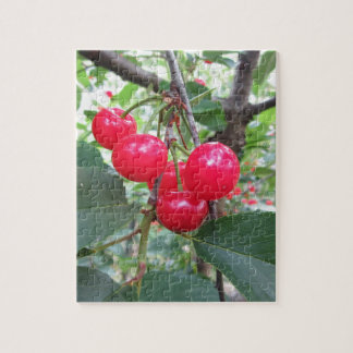 De rode kersen van Montmorency op boom in Puzzel