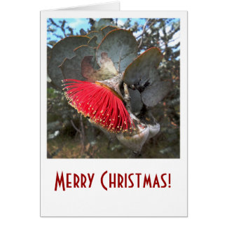 De rode Kerstkaart van de Bloem van de Gom Wenskaart