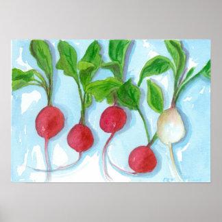 De rode Radijzen tuinieren het Plantaardige Art. Poster