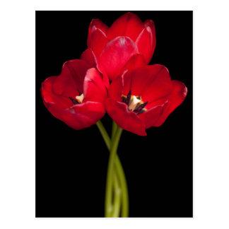 De rode Tulp bloeit Zwarte Achtergrond Bloemen Briefkaart