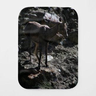 De rotsachtige Schapen van het Bighorn van de Monddoekje