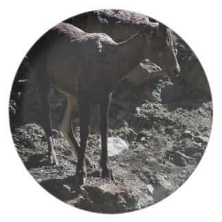 De rotsachtige Schapen van het Bighorn van de Party Bord