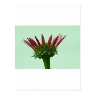 De roze Achtergrond van de Bloesem van Echinacea Briefkaart
