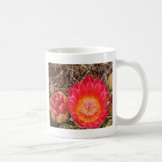 De roze Bloei van de Cactus van het Vat van Koffiemok