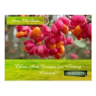 De roze Bloem van de As bewaart het Briefkaart van