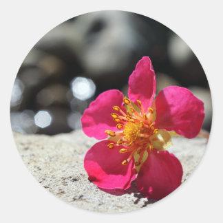 De Roze Bloem van de geheimzinnigheid Ronde Sticker