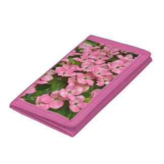 De roze bloemen van de kousakornoelje