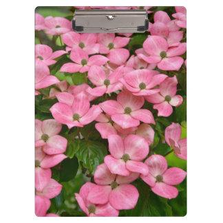 De roze bloemen van de kousakornoelje klembord