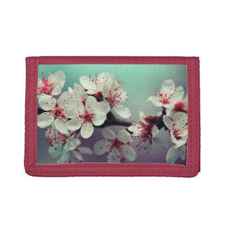 De roze Bloesem van de Kers, Cherryblossom, Sakura