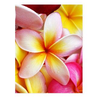 De roze Gele Paarse Bloemen van Plumeria Briefkaart
