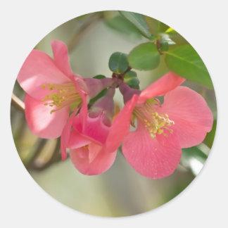 De roze het Bloeien Gloed van de Kweepeer Ronde Sticker