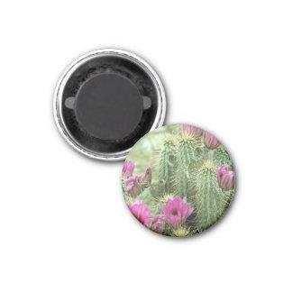 De roze Magneet van de Ijskast van de Cactus van d