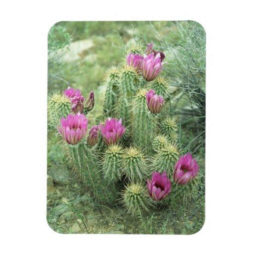 De roze Magneten van de Koelkast van de Cactus van