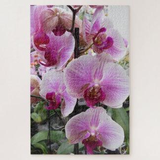 De roze Orchideeën van de Mot Puzzel