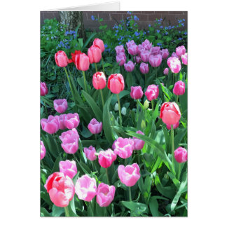De roze Paarse Tulpen van de Lente van de Lente Briefkaarten 0