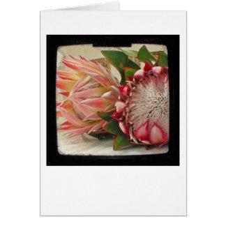 De roze Protea Foto van Bloemen TTV Briefkaarten 0