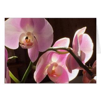 De roze Spatie van de Orchidee binnen Wenskaart