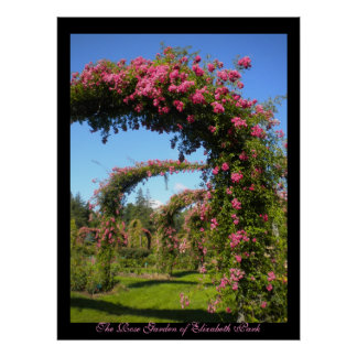 De roze Tuin van Elizabeth Park Poster