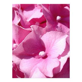 De roze vlieger van de Hydrangea hortensia Flyer 21,6 X 27,9 Cm