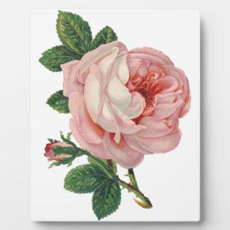 De rozen zijn Roze Fotoplaat